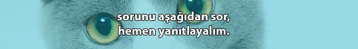 kedi piresi 1