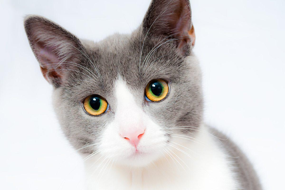 kedi-piresi-1200x800.jpg