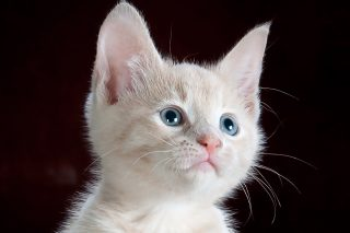 kedilerde mantar hastalığı