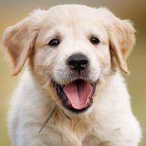 köpeklerde mantar hastalığı