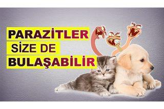 kedi ve köpeklerde parazitler